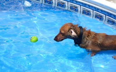 Should your dogs be in the pool?